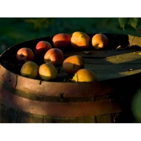pommeau - apéritif normand