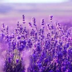 Wilde lavendelzeep