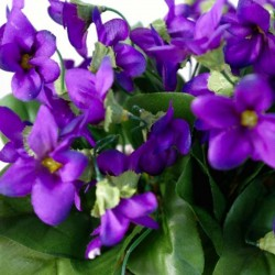 Perfume of violets