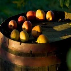 Jugo de manzana - delicatessen francés online