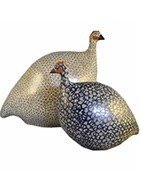The guinea fowl of Lussan