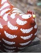 Die Lussan Hühner